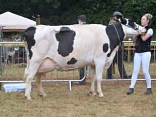 Dairy Cattle (Excluding Guernsey and Jersey)