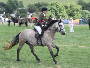 Mountain & Moorland Ponies